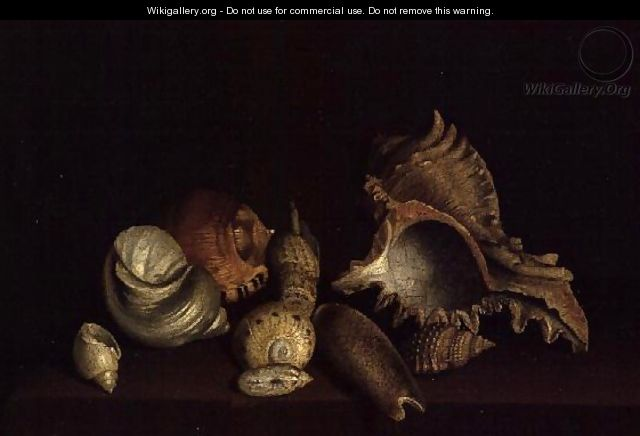 Still Life of Shells on a Ledge - Louis Hubner