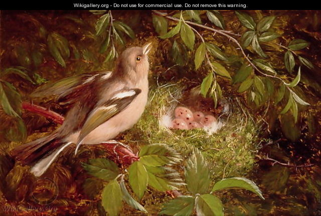 A Chaffinch at its Nest - William Hughes