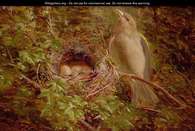 A Greenfinch at its Nest - William Hughes