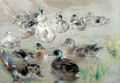 Study of Ducks - William Huggins