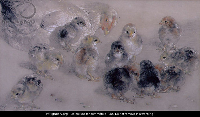 Study of Chickens - William Huggins