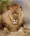 Lion 2 - William Huggins