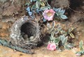 Wild Roses and Birds Nests - William Henry Hunt