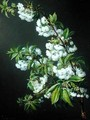 A Sprig of White Blossom - Francisco Lacoma
