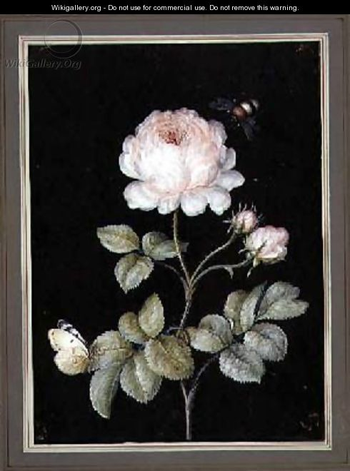 Rose with Bumble Bee and Butterfly - Ernst Friedrich Carl Lang
