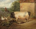 Portrait of a prize pig property of Squire Weston of Essex - Sir Edwin Henry Landseer
