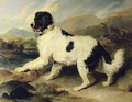 Newfoundland Dog Called Lion - Sir Edwin Henry Landseer