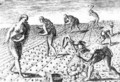 Florida Indians planting maize - (after) Le Moyne, Jacques (de Morgues)
