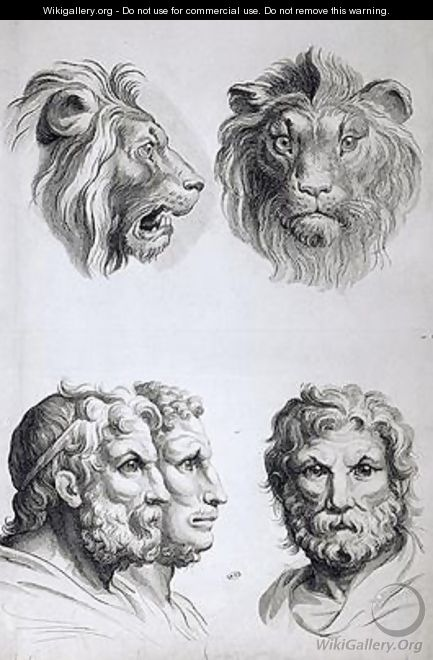 Similarities Between the Head of a Lion and a Man - (after) Le Brun, Charles