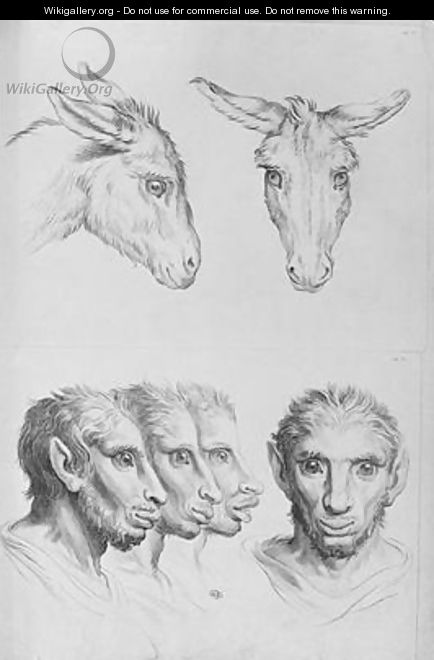 Similarities Between the Head of a Donkey and a Man - (after) Le Brun, Charles