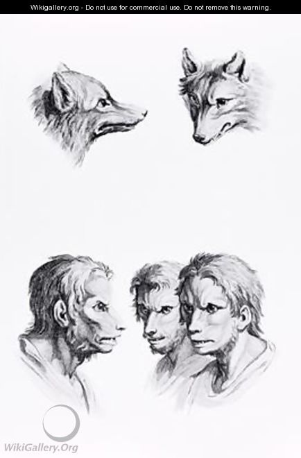 Similarities Between the Head of a Wolf and a Man - (after) Le Brun, Charles