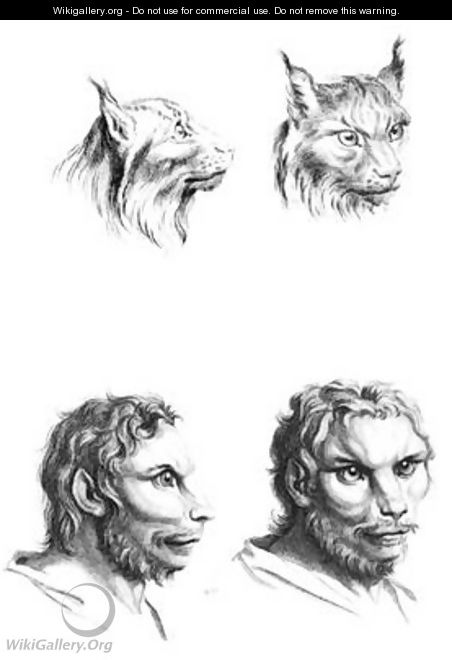 Similarities between the heads of a lynx and a man - (after) Le Brun, Charles
