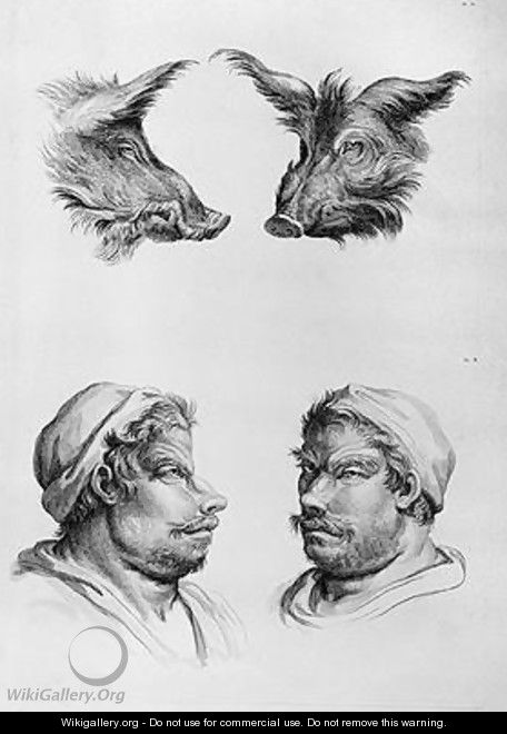 Similarities Between the Head of a Boar and a Man - (after) Le Brun, Charles