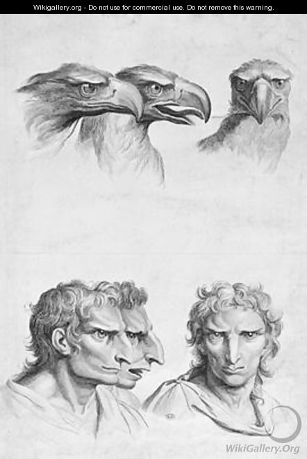 Similarities Between the Head of an Eagle and a Man - (after) Le Brun, Charles