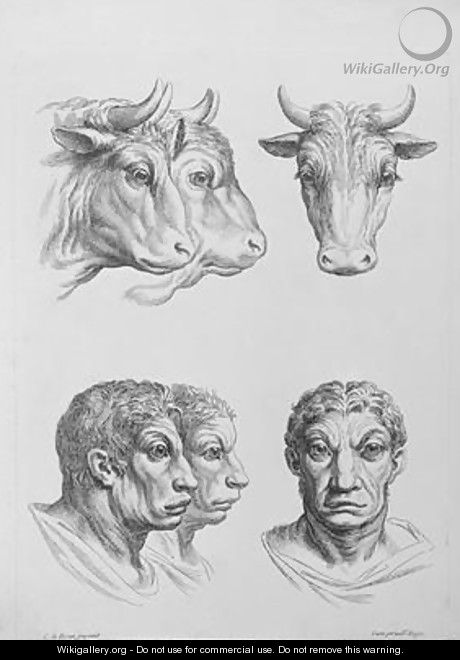Similarities Between the Head of an Ox and a Man - (after) Le Brun, Charles