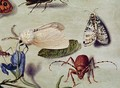 Still life detail of insects - Ferdinand van Kessel