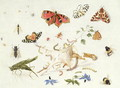 Study of Insects and Flowers - Ferdinand van Kessel