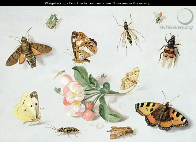Butterflies moths and other insects with a sprig of apple blossom - Jan van Kessel