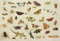 A Study of insects - Jan van Kessel