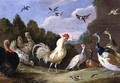 Wooded Landscape with a Cock Turkey Hens and other Birds - Jan van Kessel