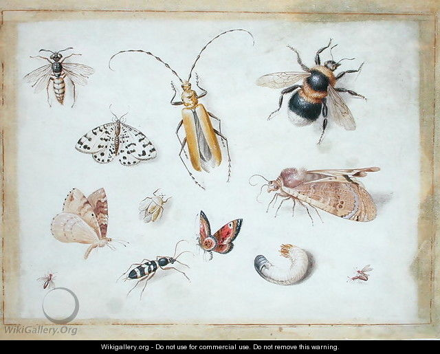 A Study of Butterflies and other Insects - Jan van Kessel