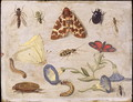 Insects 7 - Jan van Kessel