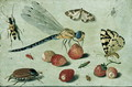 Study of Insects Butterflies and Flowers - Jan van Kessel