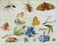 Insects 6 - Jan van Kessel