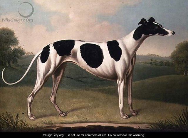 Greyhound - Benjamin Killingbeck