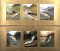 Selection of Fish Paintings - A. Roland Knight