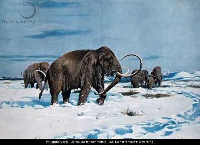 Troop of mammoths in the Ice Age - (after) Kuhnert, Wilhelm