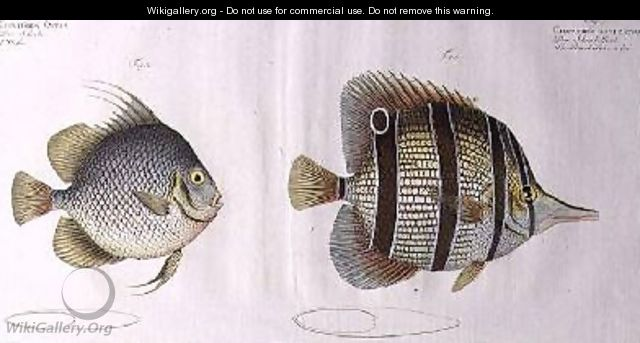 Orb fish - Andreas-Ludwig Kruger