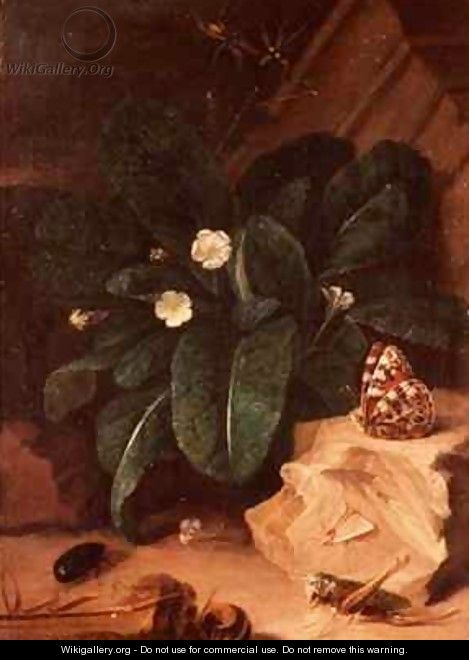 Still Life with Primroses and Insects - Carl Wilhelm de Hamilton