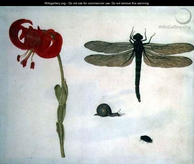 Study of a red tiger lily a snail a beetle and a dragonfly - Herman Henstenburgh