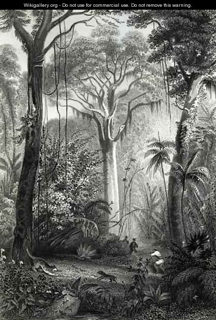 Scene in a Brazilian Forest - Henry George Hine