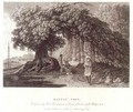 A Banyan Tree from Travels in India in in the Years 1780-83 - (after) Hodges, William