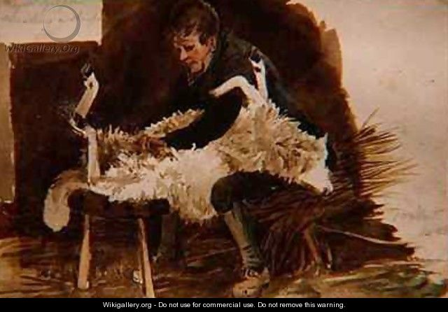 Major Gilpin Shearing a Sheep - John Harden