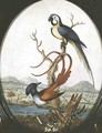 Lyrebird and Jay - William Hayes