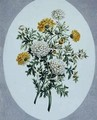 Chrysanthemum - John Edwards