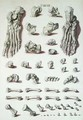Bones of the foot from Tabulae Osteologicae - (after) Eisenberger, Nikolaus Friedrich