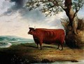 Portrait of a Brown Cow - George Fenn