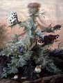 Insects Around a Thistle - Margaretha Barbara Dietzsch