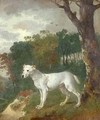 Bumper a Bull Terrier - Thomas Gainsborough