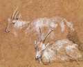 Study of Goats - Thomas Gainsborough