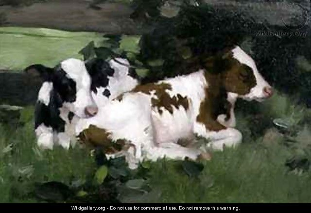 Ayrshire Calves - David Gauld
