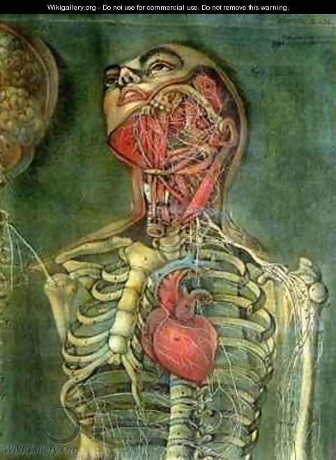 Throat and heart plate from Anatomy of the Visceras dissected - Jacques - Fabien Gautier - Dagoty