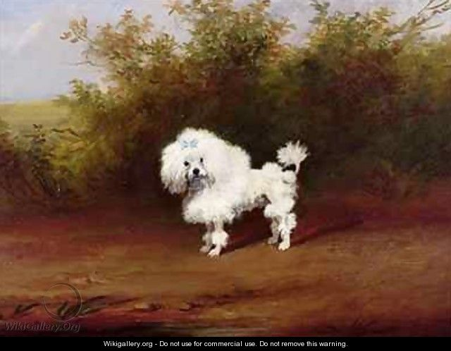 A Toy Poodle in a Landscape - Frederick French