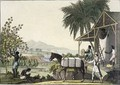 Cotton making Dutch Antilles East Indies - Paolo Fumagalli