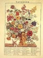 November from Flower Garden Displayed - Robert Furber