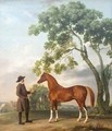 Lord Grosvenors Arabian Stallion with a Groom - George Stubbs